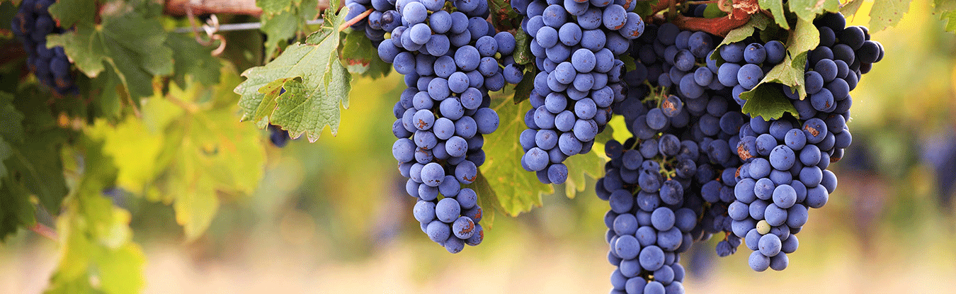 Grapes and Logo